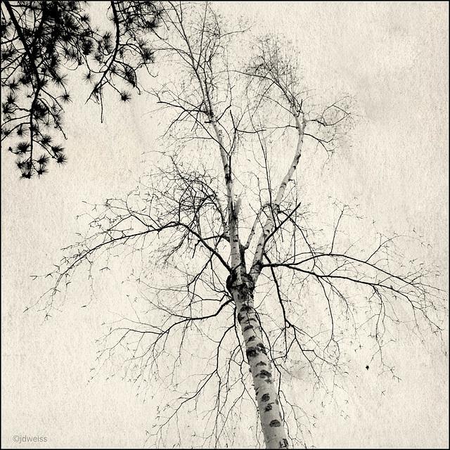 tree to tree
