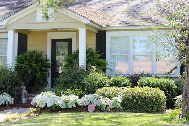 A cottage-type home, lovely colors, landscaped with white Colladium plants.  my town, USA..2017