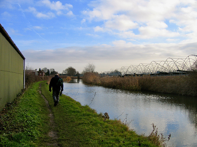 Coventry Canal with tubular steel poly-tunnels on the right