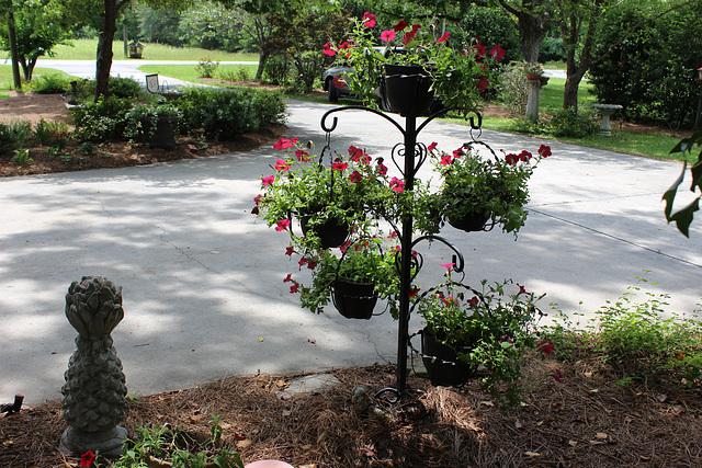 "My ""Petunia Tree""  (black wrought iron)"