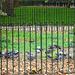 Die Tauben der Hyde Park Corner (HFF!)