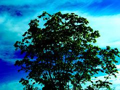 *** L'arbre de la vie ***