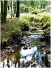 Reflets au ruisseau de la vallée du Val Hervelin (22)