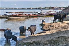 Balade sur les rives du Gange