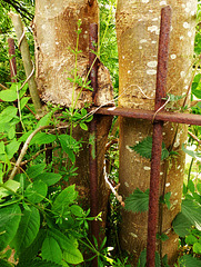 Trees or rust......