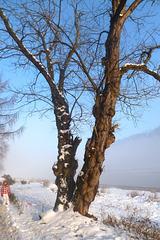 Spaziergang im Neuen Jahr - novjara promenado