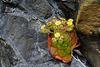 Leben im Vulkanschutt - Life in volcanic rocks - mit PiPs
