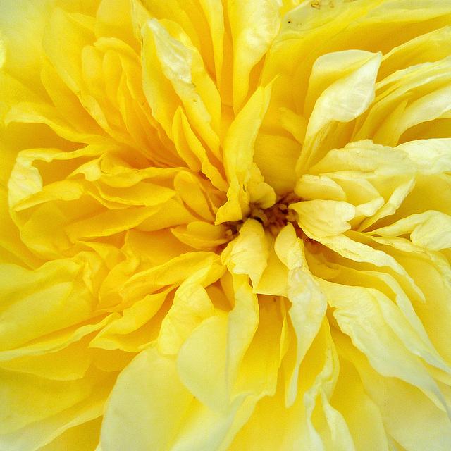 Cœur de fleur 3