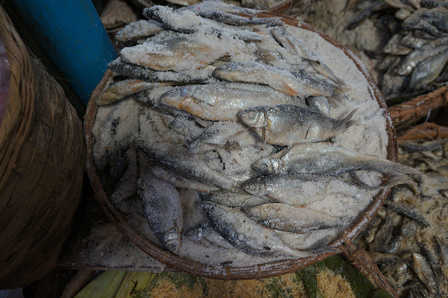 Salted fishes