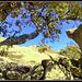 Holm Oak and granite.