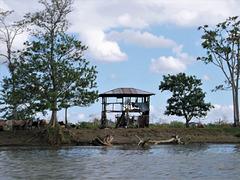 Troupeau et abri de fortune (Nicaragua)
