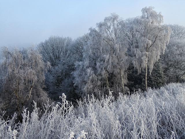 A frosty outlook