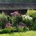 Lovely late summer garden