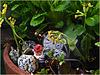 Mein Gartenzwerg ... oder *Zeitarbeiter