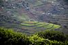 Uganda, Tea Plantation Terraces