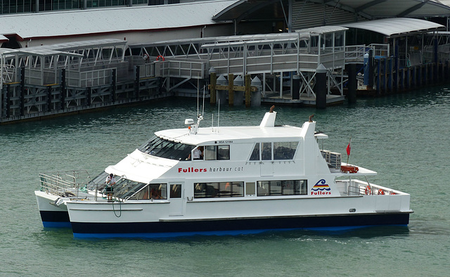Fullers Harbour Cat at Auckland - 21 February 2015