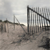 protecting the dunes