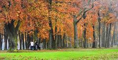 Meeting  under old  oak trees