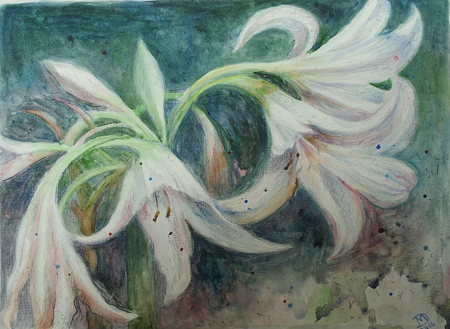 Lilies in the night