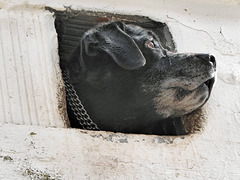 Dog looking out of small window in Serpa, Alentejo..
