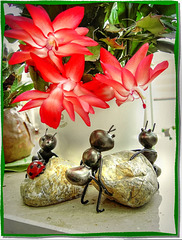Meeting under the Christmas Cactus... ©UdoSm