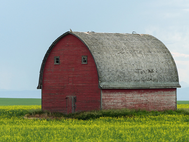 A favourite barn - with a visitor on the roof