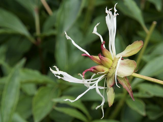 Floral Spider