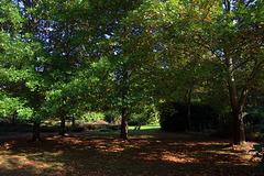 Les dernières couleurs de l'automne