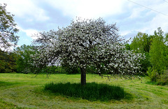 Auf dem Traubenpfad Nr. 3