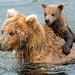 cute-bears
