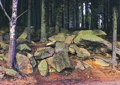Der Brockenwald, auf Fels gewachsen! (PiP)