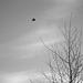 Fly like a bird (monochrome version)