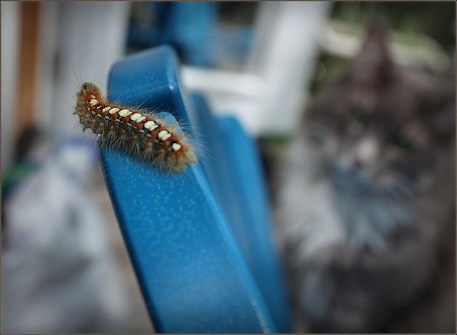 Some caterpillar