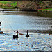 Birds on Lake Moananui