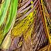 fallen palm - walking in Kaimuki