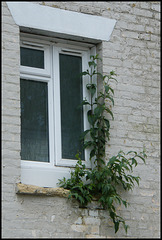window sill plant