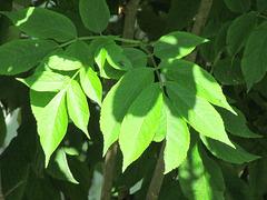 Le Vert de l'Espérance…..