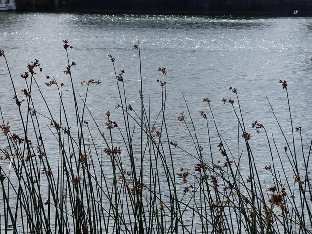 Flores de orilla del río
