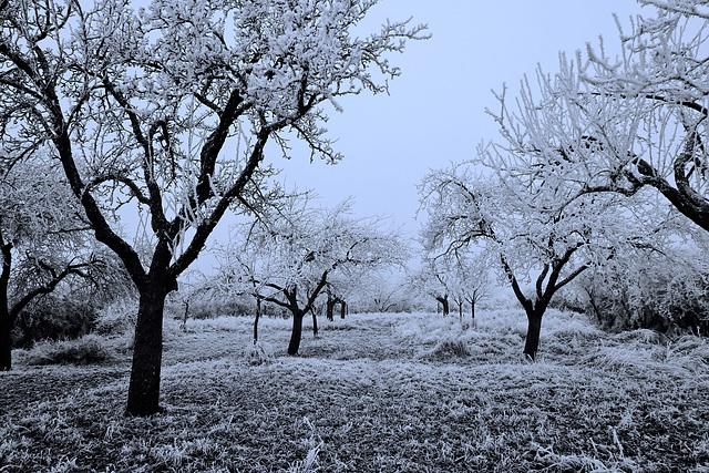 Winter in einem Obstgarten - Winter in an orchard