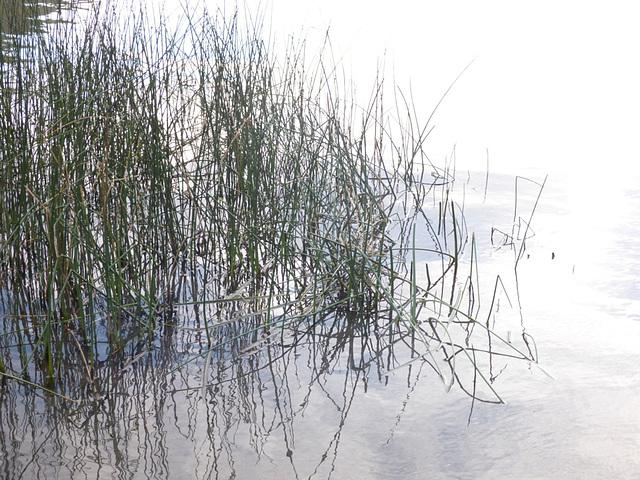 Plantas del lago