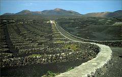La Geria.Lanzarote