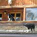 Ich schau mich mal um Refugio Friedrich Heinrich, Campitello, Trentino, Italien