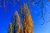 Sur fond de ciel bleu