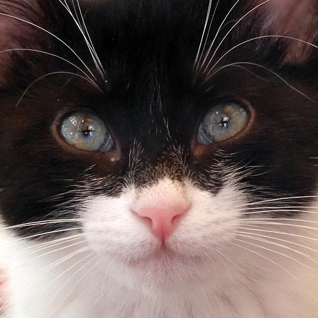 """Au tréfonds du regard : """"Un chat ? Des masqués"""""""