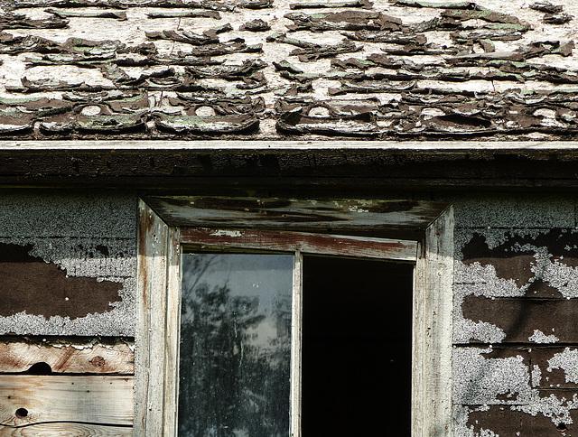 Homestead remnants
