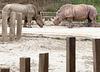 ... zoo Singapour ...