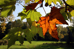 Et ce n'est que le début de l'automne