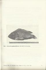 lucena   lucena hyporthodus nigritus