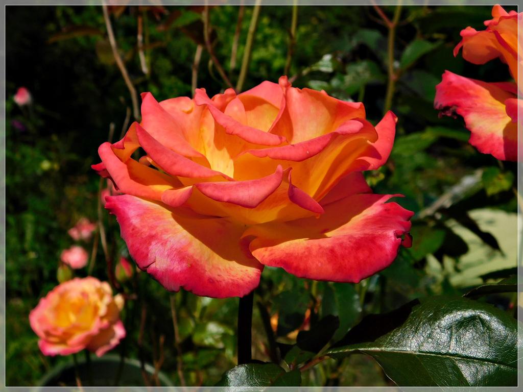 Au jardin ...................Bon weekend