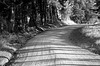 Ruatangata Back Road
